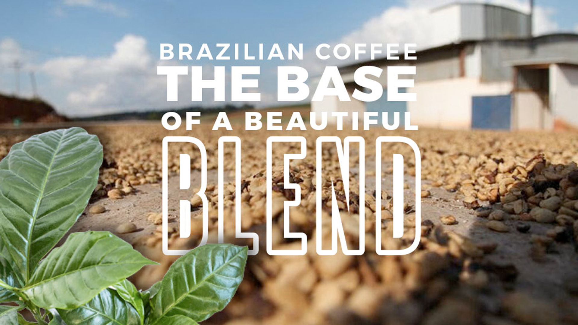 Base of a Beautiful Coffee Blend