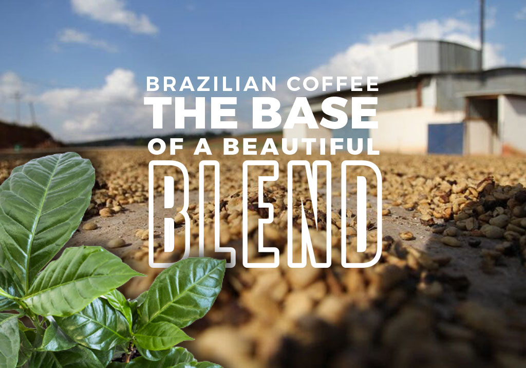 Brazilian Base of a Brilliant Blend