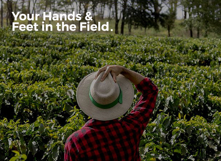 Connection to Coffee in the Field